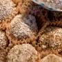 Сурови веган бомбони с орехи и годжи бери