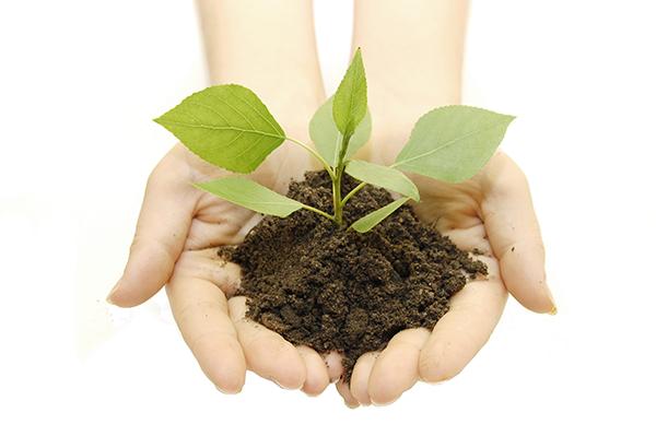 Тежки Метали Почва